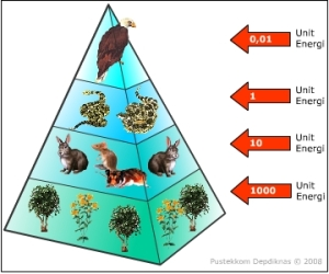 Piramida energi